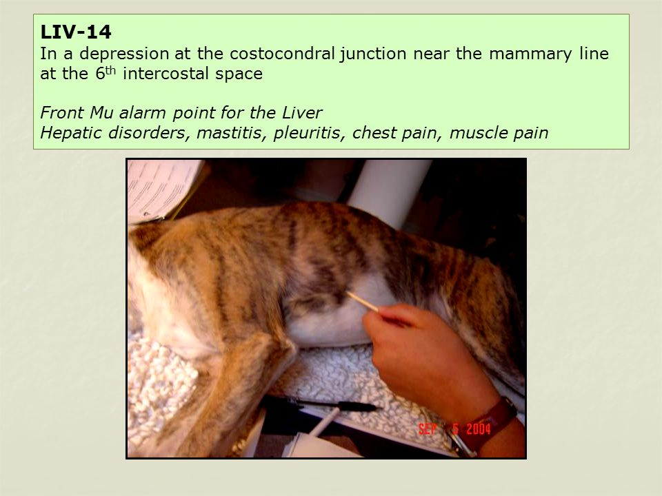 Commonly Used Canine Transpositional Acupuncture Points - ppt video
