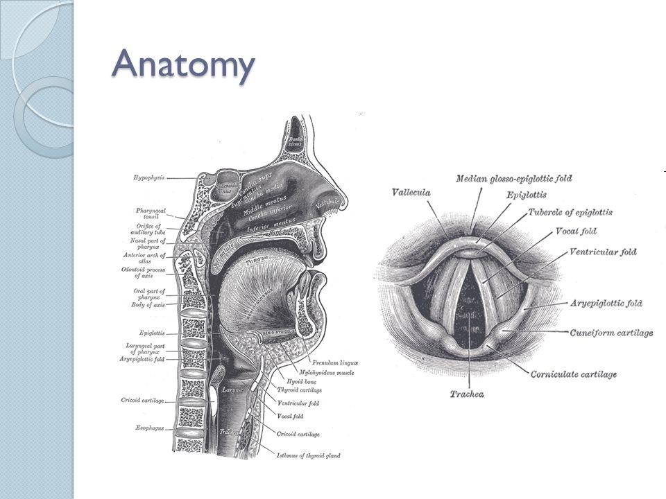 Airway intubation Joana Almeida. - ppt video online download