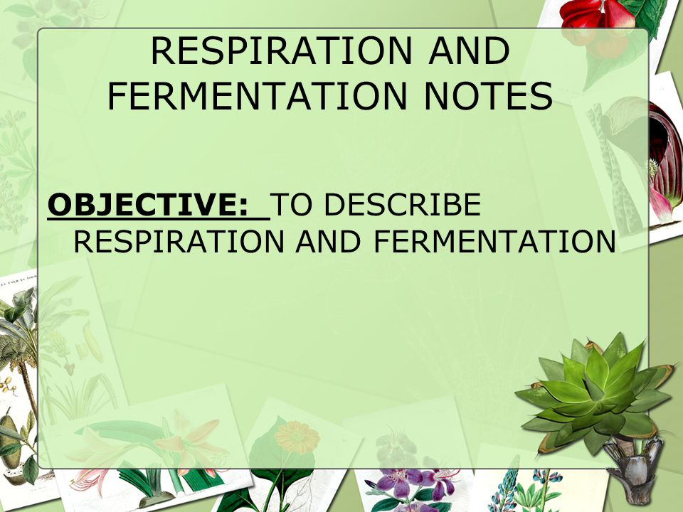 RESPIRATION AND FERMENTATION NOTES