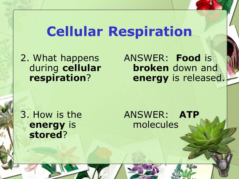 Cellular Respiration 2. What happens during cellular respiration