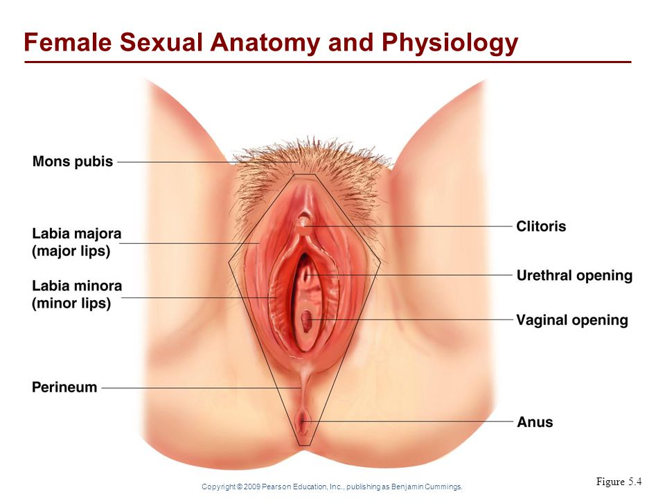Sex education female anatomy