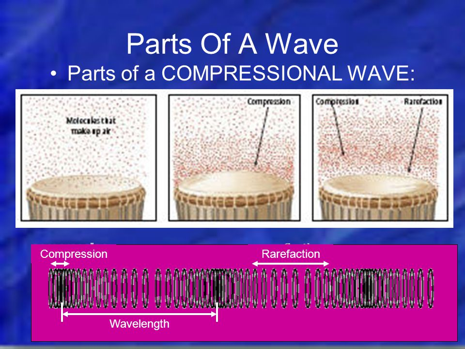 Parts of a COMPRESSIONAL WAVE: