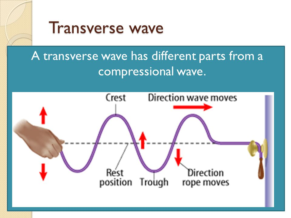 A transverse wave has different parts from a compressional wave.