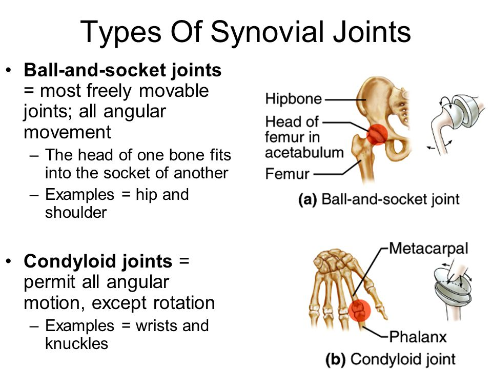 Joints Of The Skeletal System Ppt Download