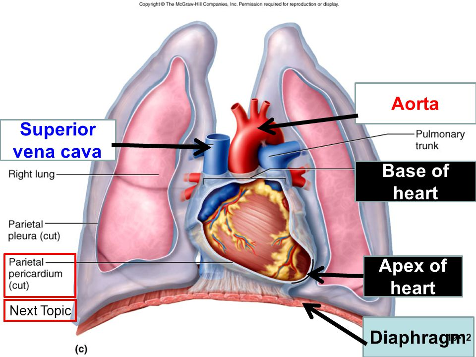 Chap 19 The Heart Cardiology Ppt Video Online Download