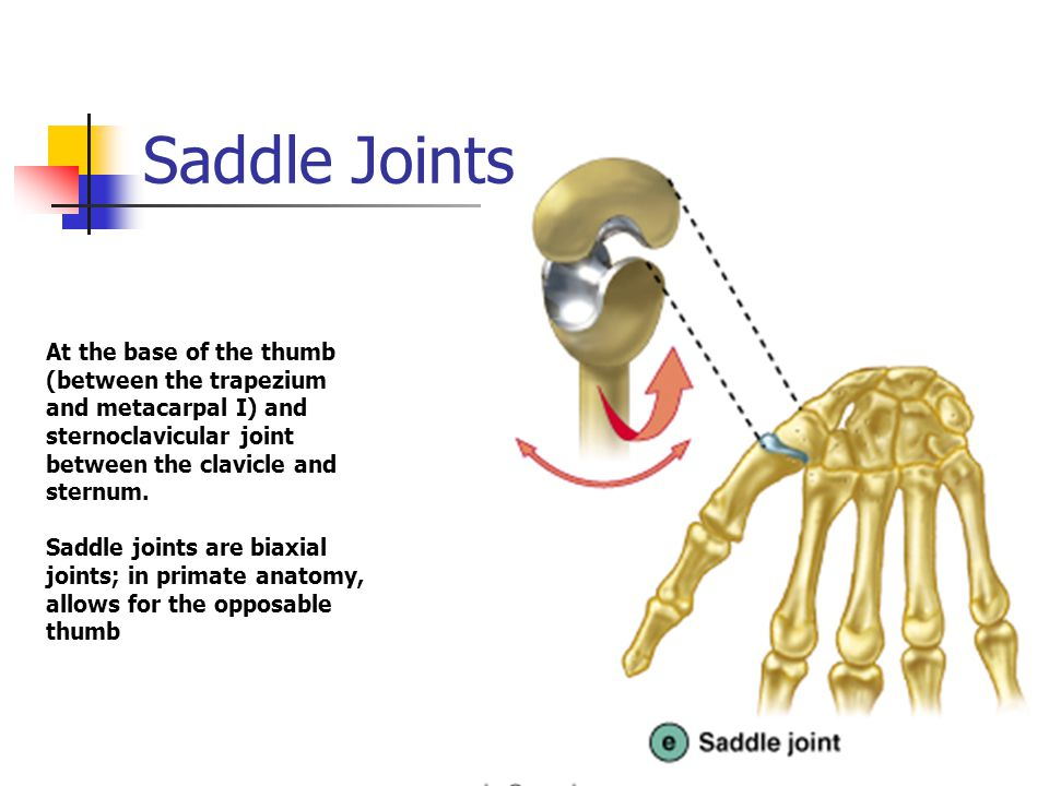 Joints and Articulations - ppt video online download
