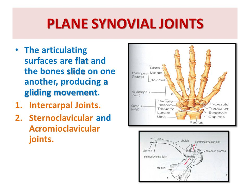 PLANE SYNOVIAL JOINTS The articulating surfaces are flat and the bones slide on one another, producing a gliding movement.
