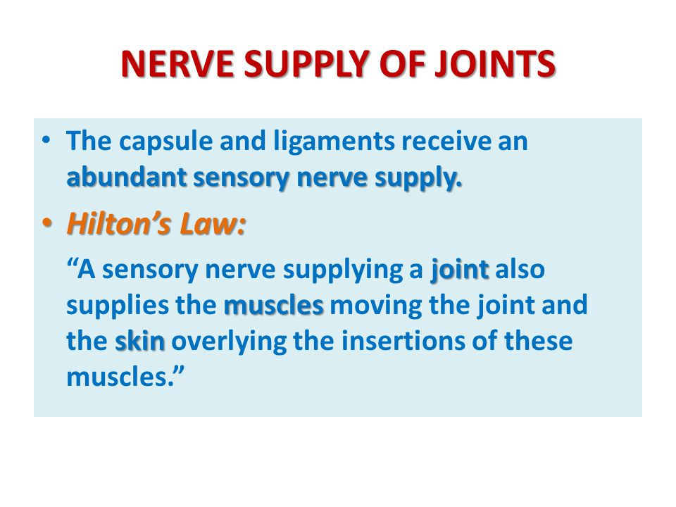 NERVE SUPPLY OF JOINTS Hilton's Law: