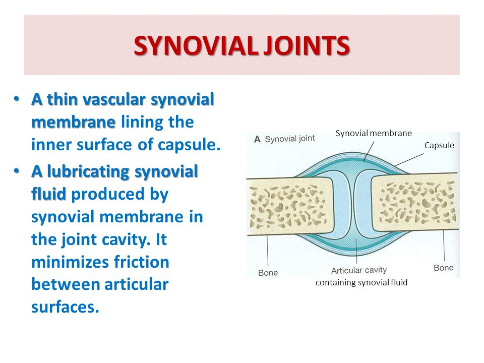 SYNOVIAL JOINTS A thin vascular synovial membrane lining the inner surface of capsule.