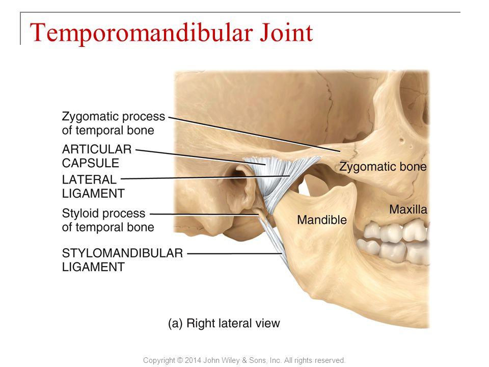Perfect Temporomandibular Joint Anatomy Ppt Motif - Anatomy And ...
