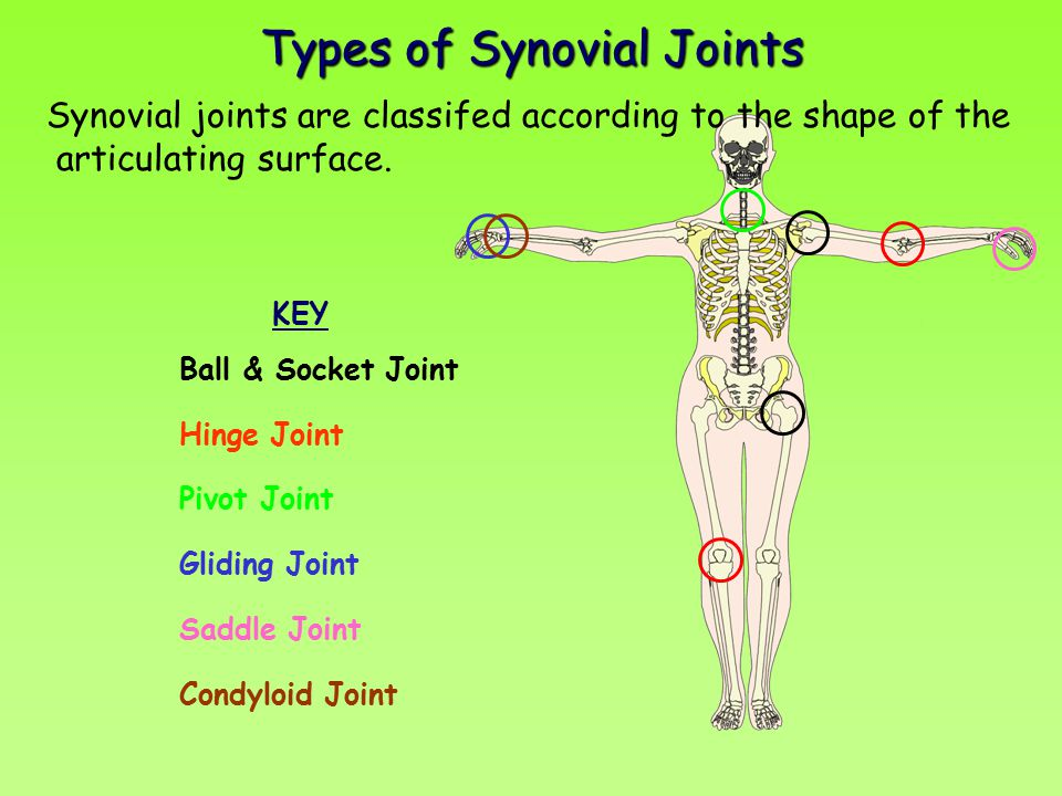 JOINTS. - ppt video online download