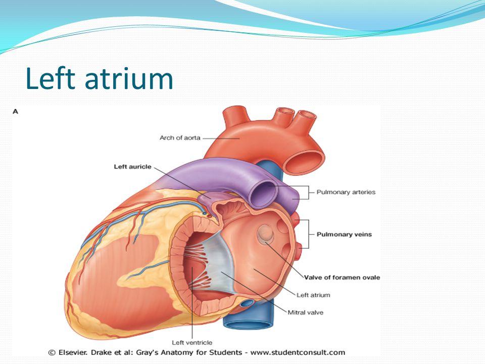 Middle mediastinum. - ppt video online download