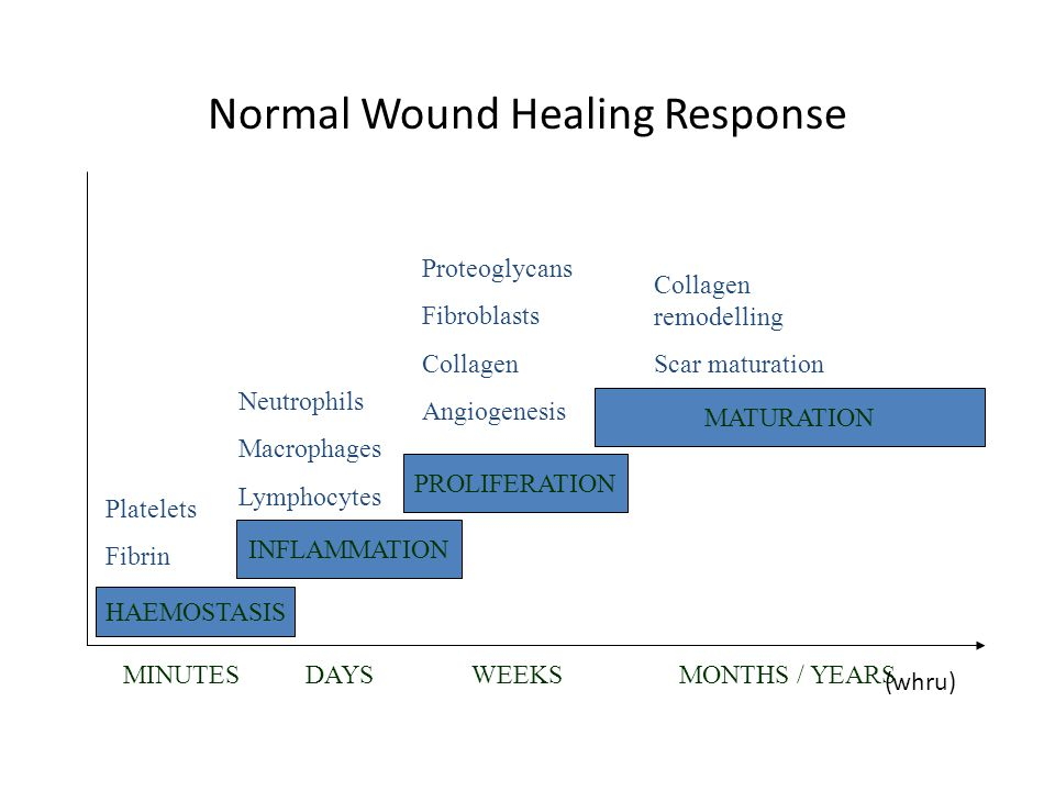 Stages Of Wound Healing Pictures