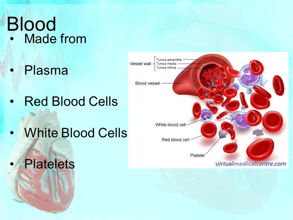 Blood Made from Plasma Red Blood Cells White Blood Cells Platelets