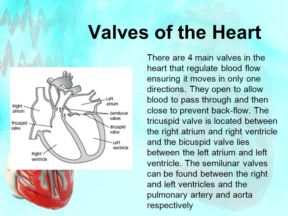 Valves of the Heart