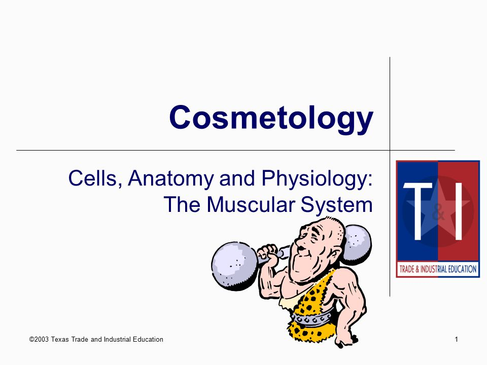 Cells, Anatomy and Physiology: The Muscular System - ppt download