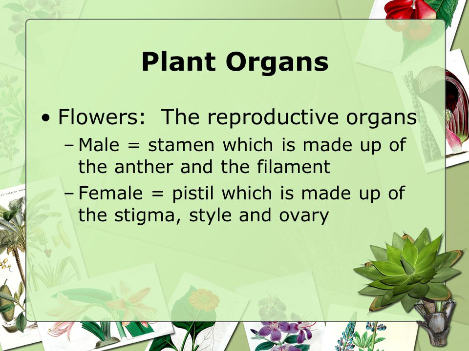 Plant Organs Flowers: The reproductive organs