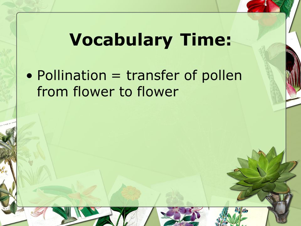 Vocabulary Time: Pollination = transfer of pollen from flower to flower