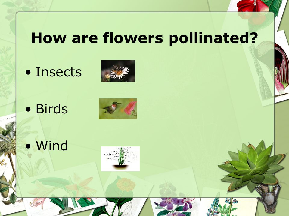 How are flowers pollinated
