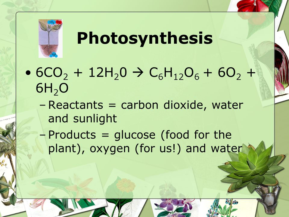 Photosynthesis 6CO2 + 12H20  C6H12O6 + 6O2 + 6H2O