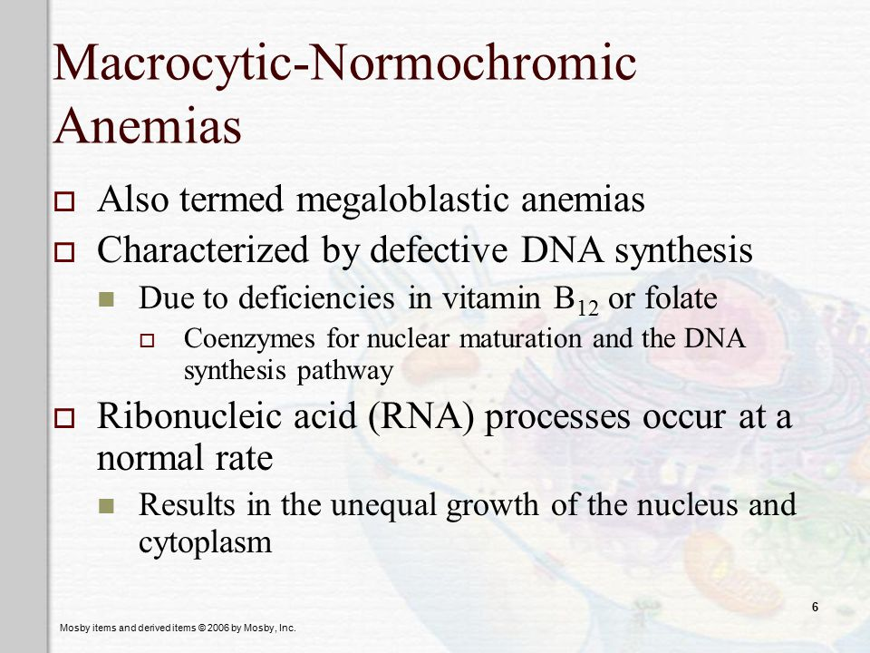 Macrocytic-Normochromic Anemias