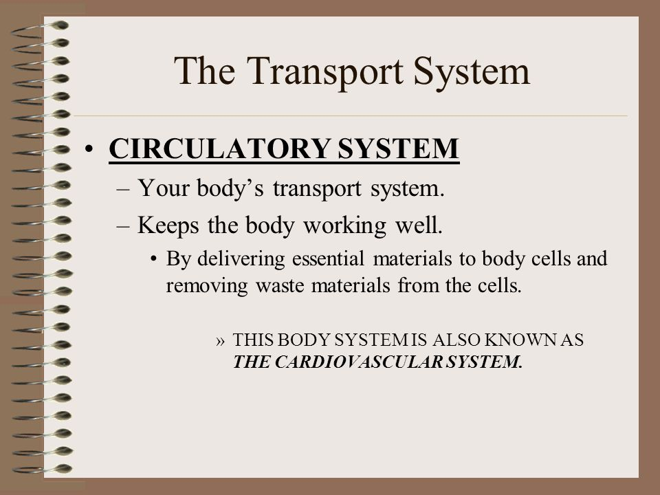 The Transport System CIRCULATORY SYSTEM Your body's transport system.
