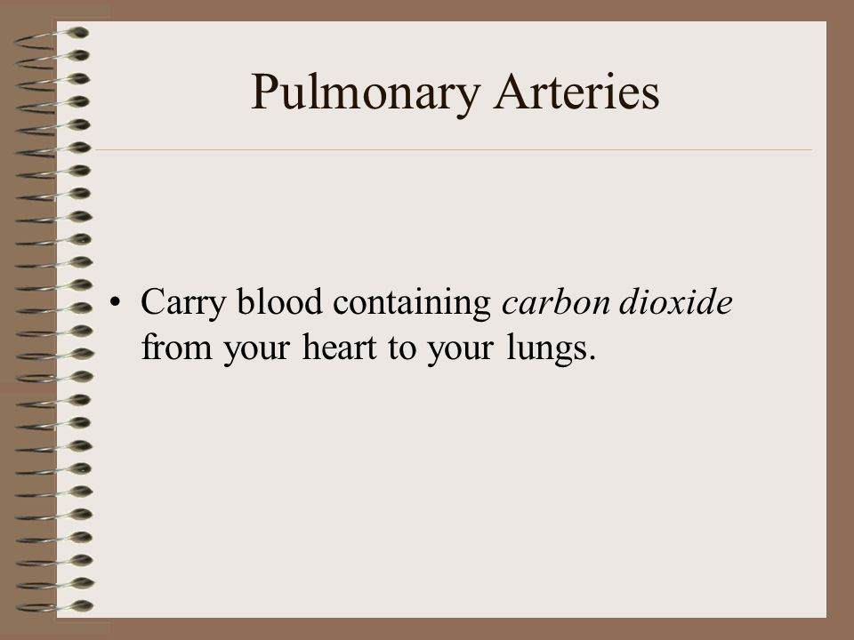 Pulmonary Arteries Carry blood containing carbon dioxide from your heart to your lungs.