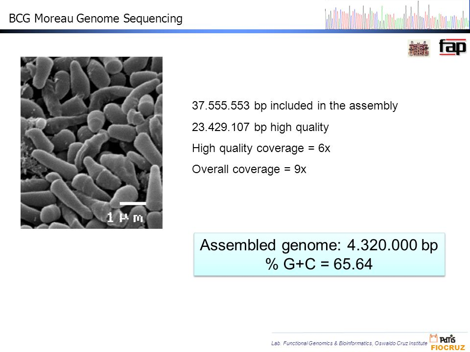 Assembled genome: 4.320.000 bp % G+C = 65.64