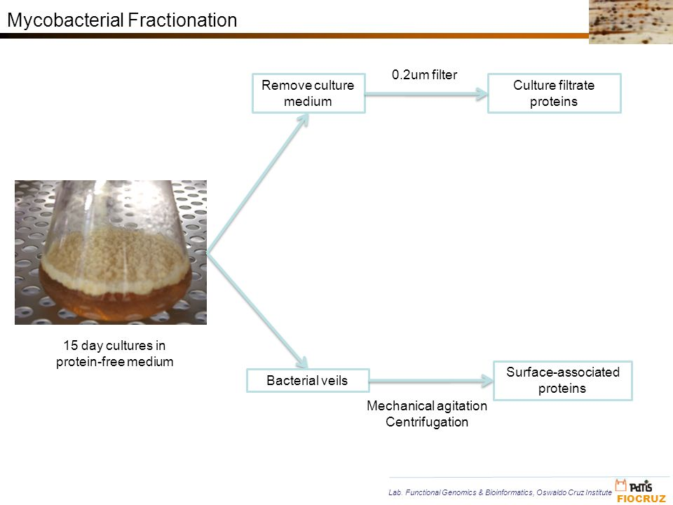 Mycobacterial Fractionation