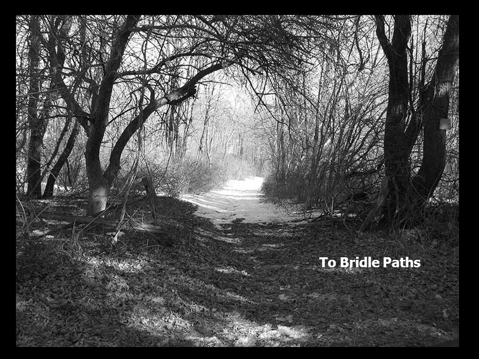 To Bridle Paths