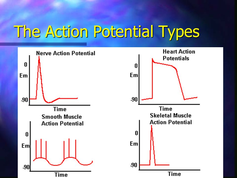 The Action Potential Types