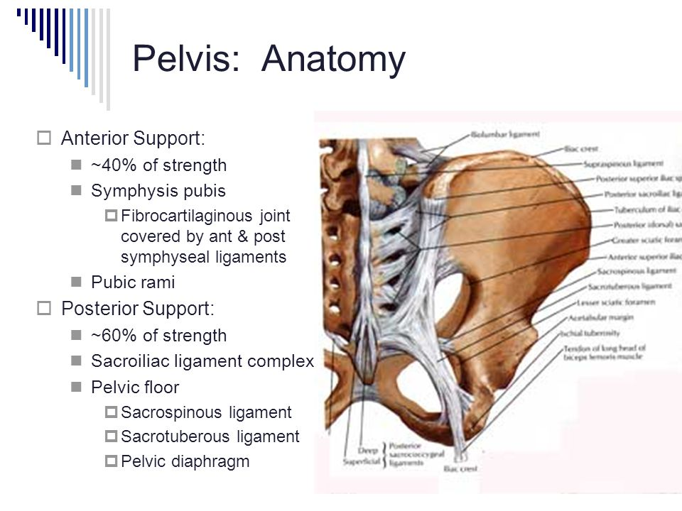 X-rays: Pelvis, Hip & Shoulder - ppt video online download