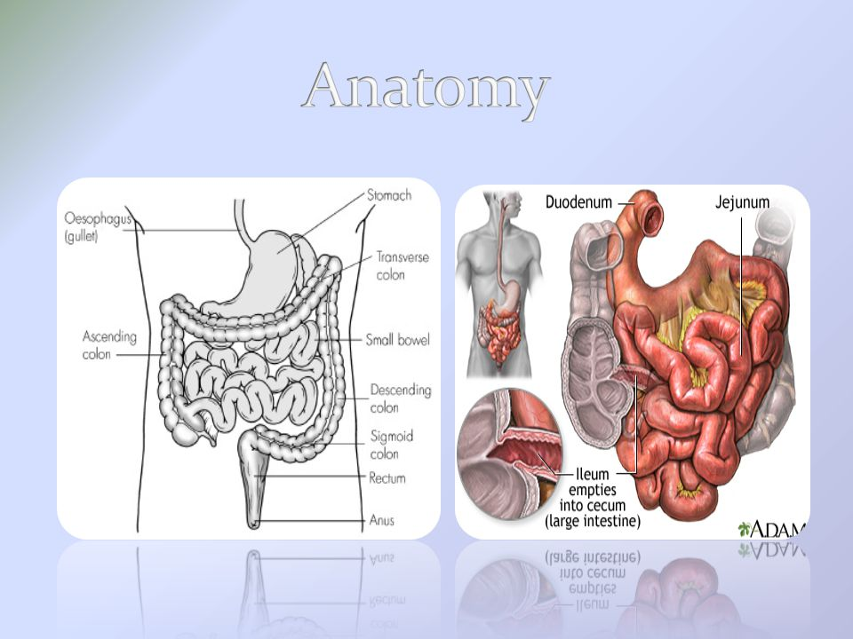 Small Bowel procedures - ppt video online download