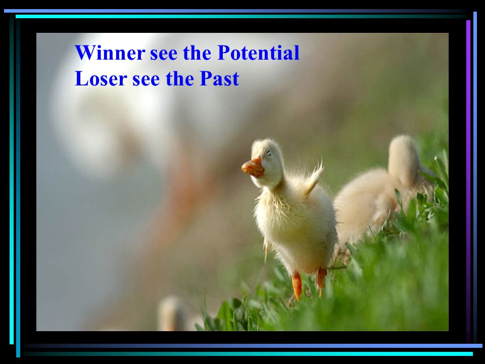 Winner see the Potential