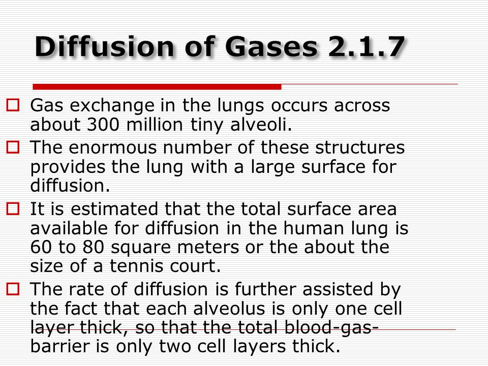 Diffusion of Gases Gas exchange in the lungs occurs across about 300 million tiny alveoli.