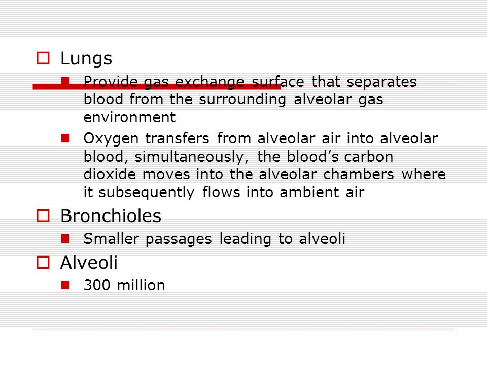 Lungs Bronchioles Alveoli