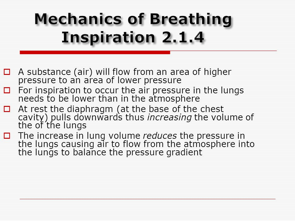 Mechanics of Breathing Inspiration 2.1.4