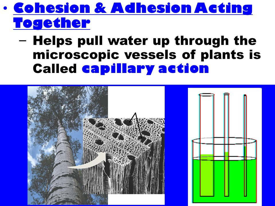 Cohesion & Adhesion Acting Together