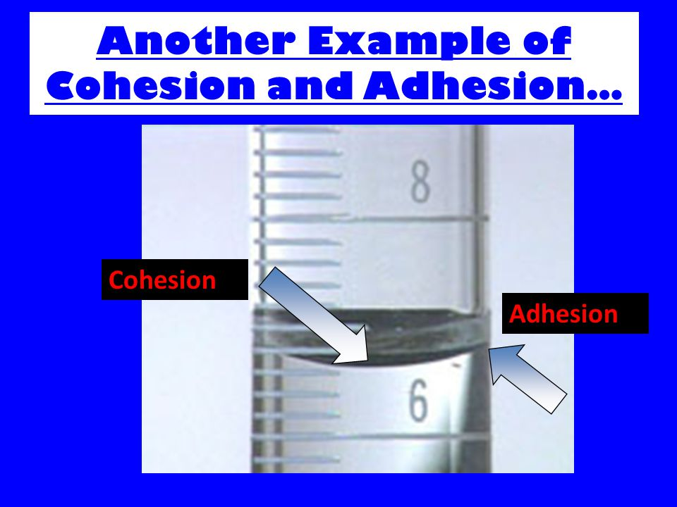 Another Example of Cohesion and Adhesion…