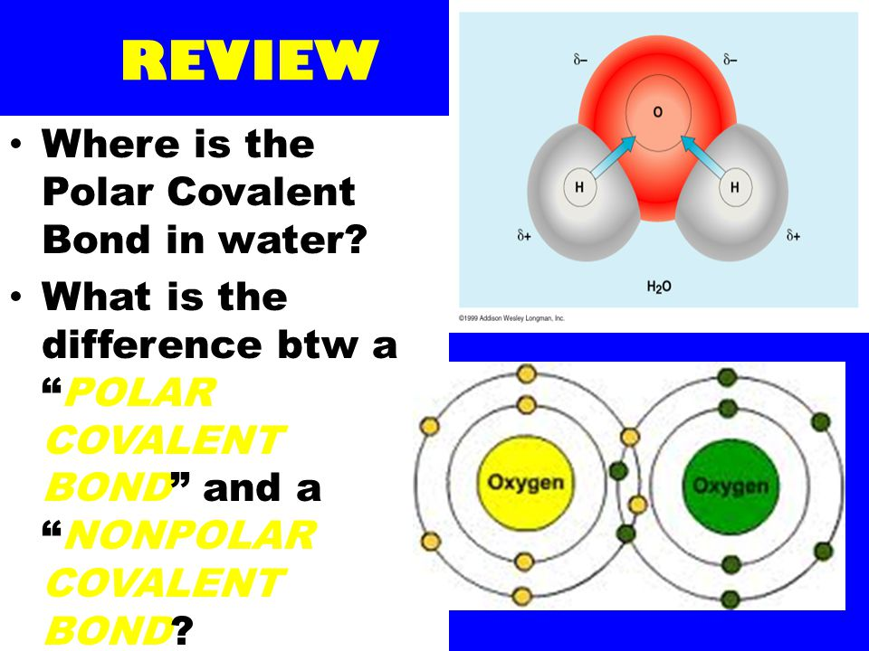 REVIEW Where is the Polar Covalent Bond in water