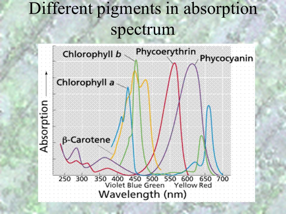Different pigments in absorption spectrum