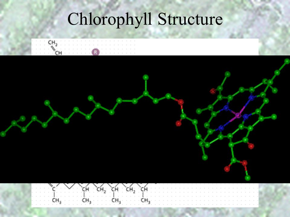 Chlorophyll Structure