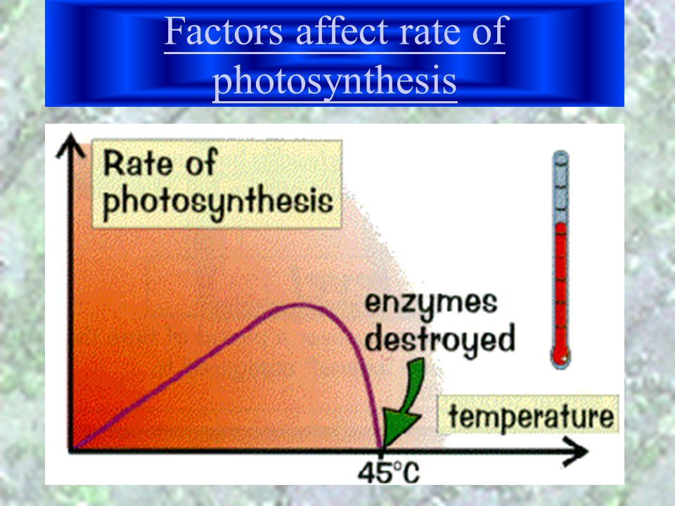 Factors affect rate of photosynthesis