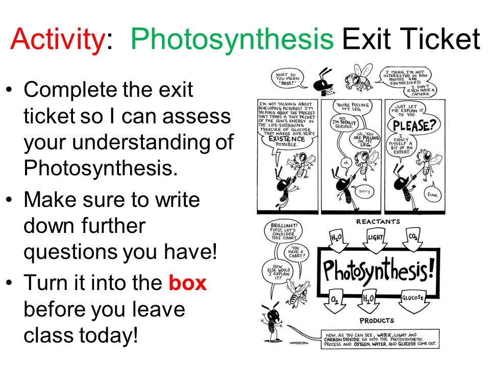 Photosynthesis essential questions ppt video online download 21 activity photosynthesis exit ticket ccuart Image collections