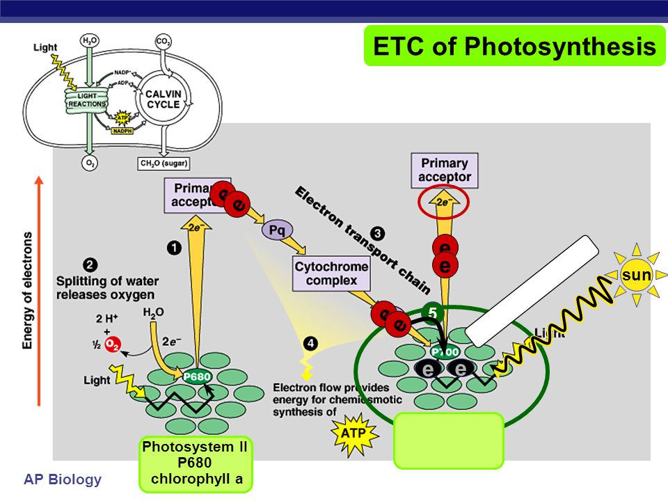 Photosynthesis life from light and air ppt download 22 photosystem ccuart Choice Image