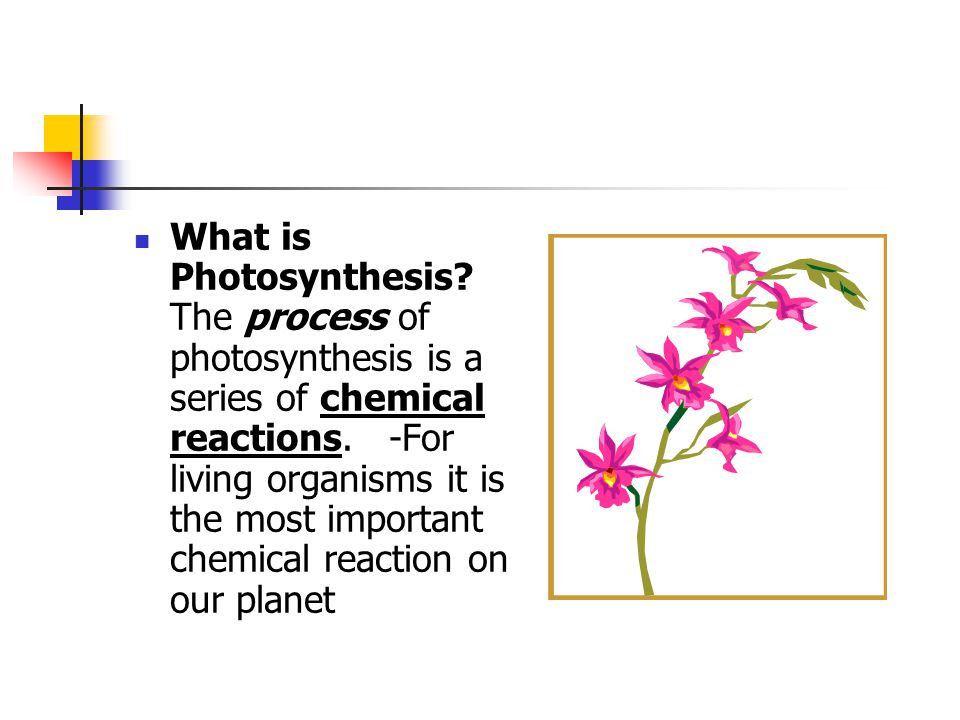 why is photosynthesis an important process for all living organisms