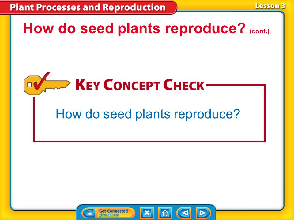 Lesson 1 Energy Processing in Plants - ppt video online download