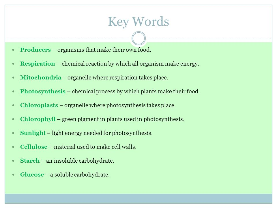 Key Words Producers – organisms that make their own food.