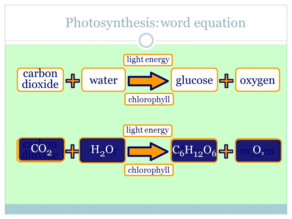 Photosynthesis: word equation