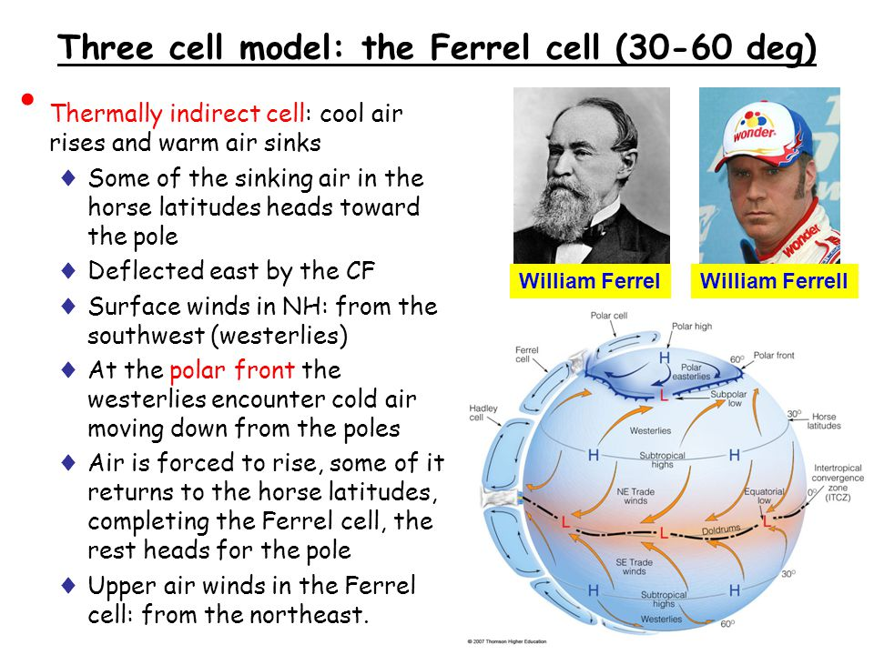 Three cell model: the Ferrel cell (30-60 deg)